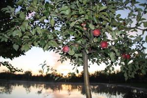 Fructe bio in caminul pentru batrani
