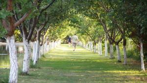 Plimbare in aer liber